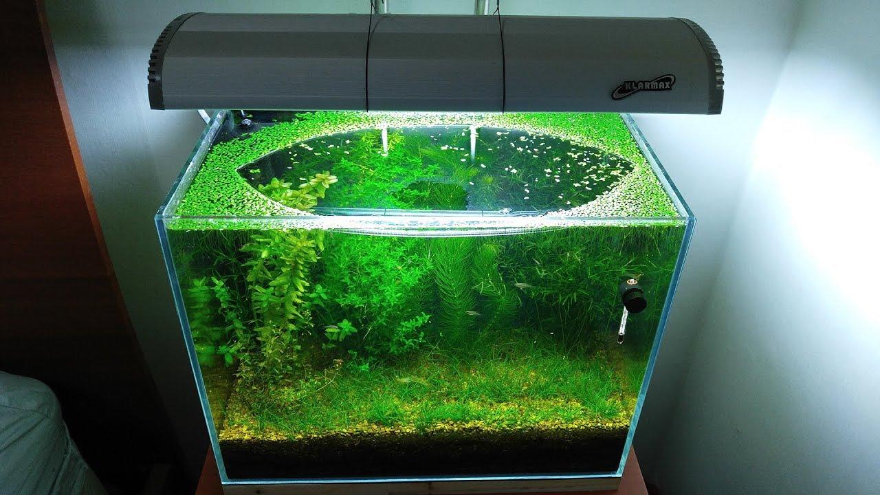 ein aquarium ganz ohne filter und pumpe. Black Bedroom Furniture Sets. Home Design Ideas